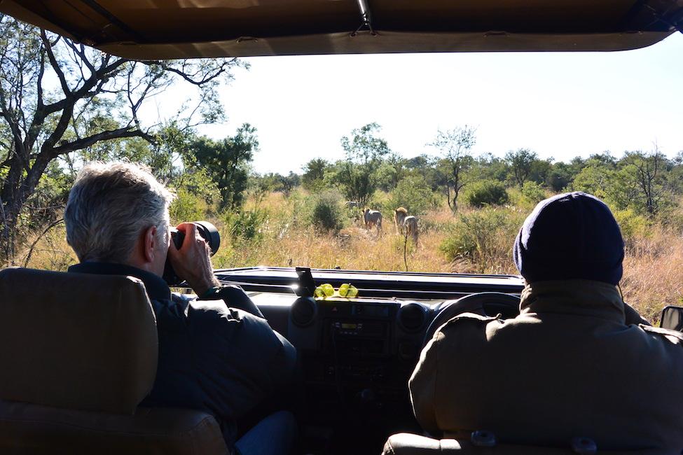 Zuid-Afrika bucketlist: op safari de Big 5 spotten