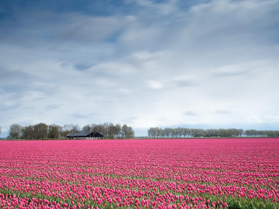 Op vakantie in Nederland: 25 voordelen van vakantie in eigen land vieren